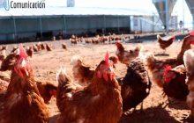 Autorizan en Pozorrubielos  de la Mancha y Villanueva de la Jara una nueva explotación avícola
